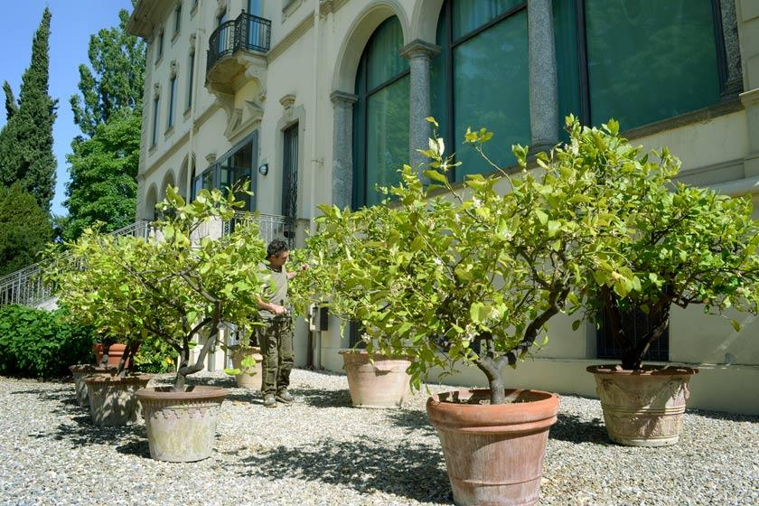 La preziosa collezione di agrumi di Luigi Magnani